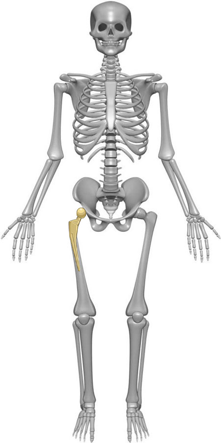 Orthozane Skeleton